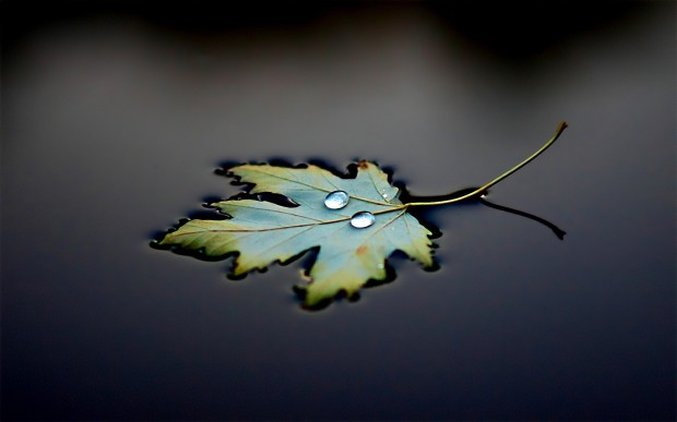 floating-leaf