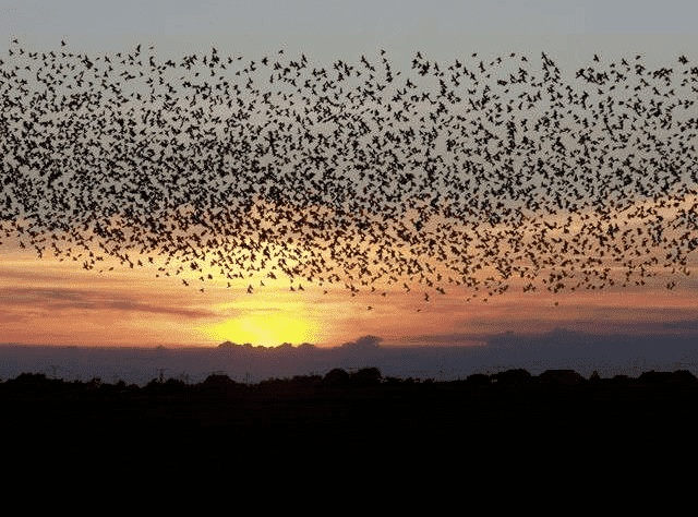 Tipe-dan-jenis-suara-burung-walet-serta-manfaat-bagi-pengusaha-sarang-burung-walet